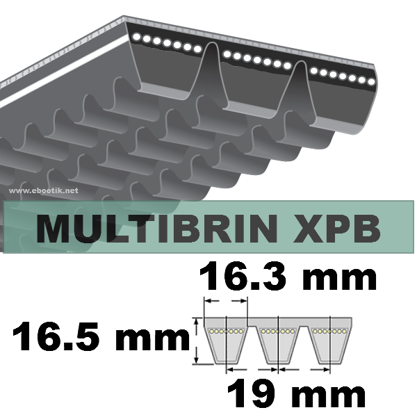 COURROIE 2xXPB2000 mm Lp